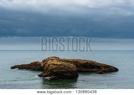 Seaguls on a rock, sea landscape stormy weather