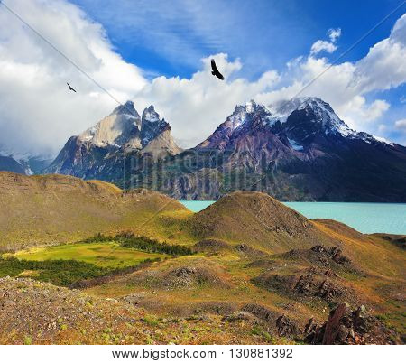 Andean condors fly over the lake Pehoe. Cliffs of Los Kuernos among the clouds. Summer day in the national park Torres del Paine, Patagonia, Chile
