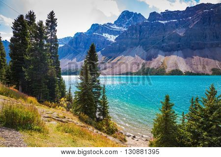 Amazing mountain glacial Bow Lake with emerald water.  The lake is surrounded by coniferous forests. Canadian Rockies, Banff National Park
