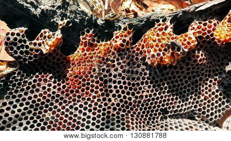 Colourful, natural bush honeycomb from a wild bee hive in a fallen tree branch
