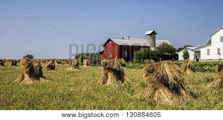 This is a classic red Amish barn with hand-cut wheat stacks freshly harvested and left to dry in the foreground