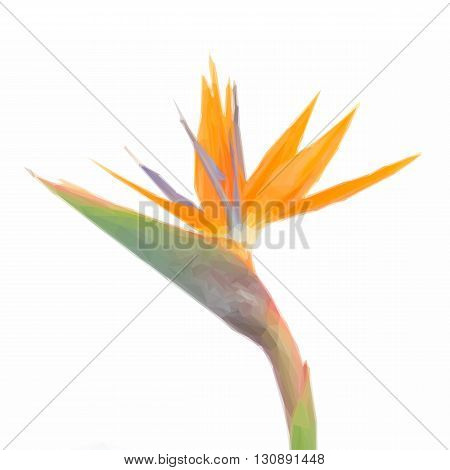 Low poly illustration Bird of paradize flower close up