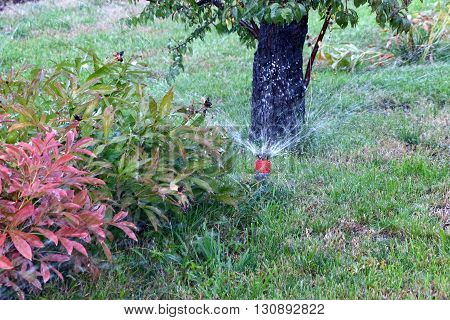 a water spray sprinkler as a tool to irrigate grass