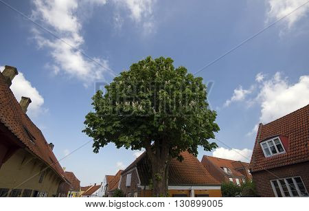 Street view from Ribe with a blooming chestnut tree - Denmark.