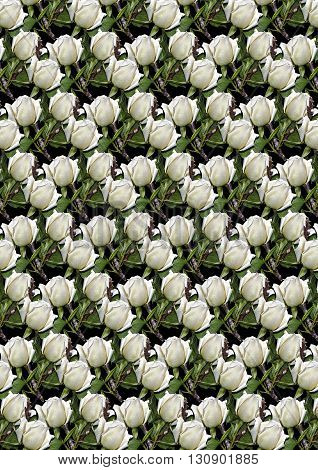 Black seamless background covered buds white roses with dry twigs