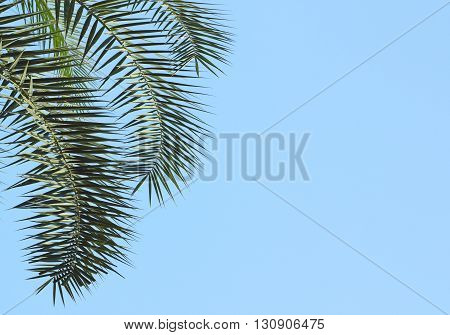 Leaves Of Palm Tree On Sky Background