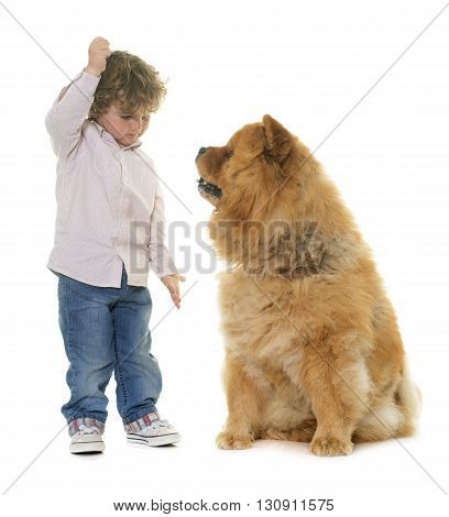 chow chow and boy in front of white background