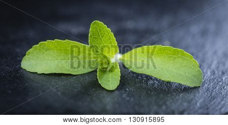 Stevia Leaves (selective Focus)