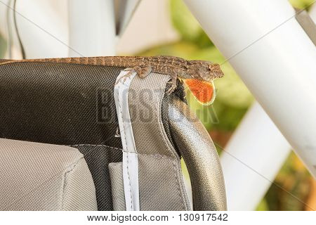 lizard sitting on an iron surface close-up