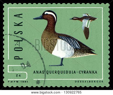 STAVROPOL RUSSIA - APRIL 30 2016: A Stamp sheet printed in Poland shows birds Anas Grecca Ducks circa 1985