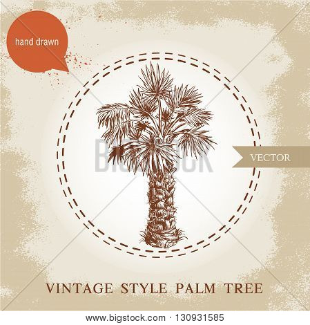 Hand drawn palm tree. Washingtonia sketch illustration on vintage grunge background. Travel and vacation symbol.