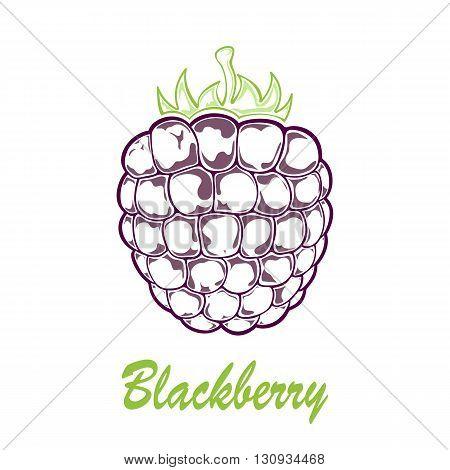 Ripe blackberry icon isolated on white background, illustration.