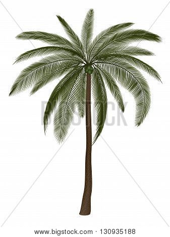 Palm tree isolated on white vector illustration. EPS 10 contains transparency.