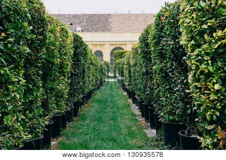 Selective focus on foreground of beautiful garden with green hedges with trees and building on background