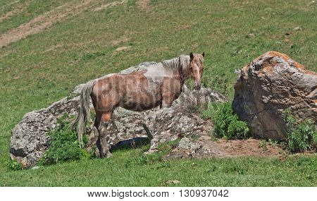 beautiful gray horse to stand on a green meadow against mountains