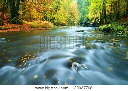 Stony Bank Of Autumn Mountain River Covered By Orange Beech Leaves. Fresh Green Leaves On Branches A