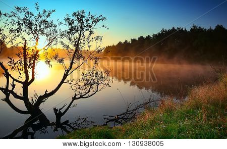 Lonely tree growing in a pond at sunrise. Dramatic silhouette. Fog over water