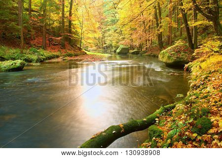 Mossy Fallen Aspen Tree Fallen  In Mountain River. Orange And Yellow Maple Leaves,, Clear Water Make
