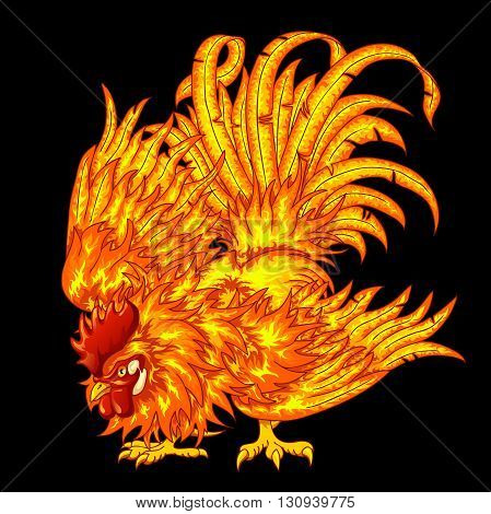Fighting fiery red orange rooster on a black background - a symbol of 2017 on east horoscope