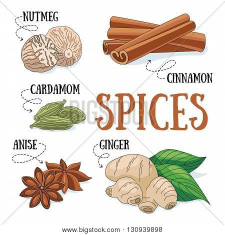 Set of spices and condiments. Vector illustration.