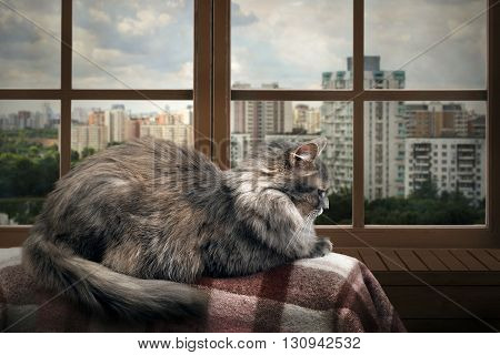 Cat on a balcony, lies on the plaid. Outside, the city, many houses, green trees. Cat high. View, panoramic window with wooden frame