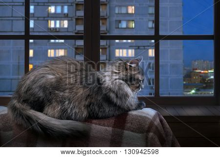 Cat on a balcony, lies on the plaid. Behind the glass windows of high-rise homes. Late evening, night. Panoramic window with wooden frame
