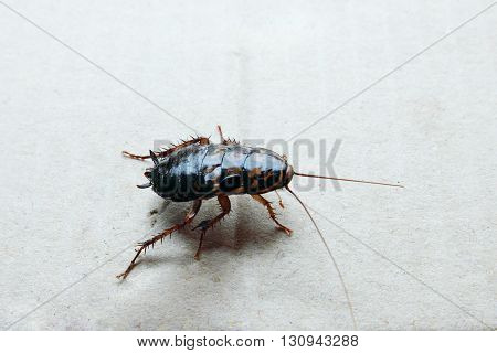 Close-up of  cockroach standing on the paper