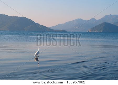 Stork walking of the sea of Marmaris