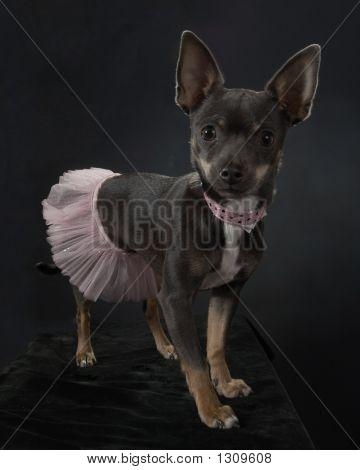 Dancin Doggy Style