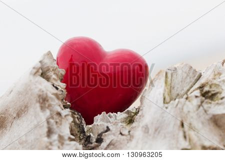 Red heart in a tree trunk and branches. Romantic symbol of love, Valentine's Day. Black and white against red.