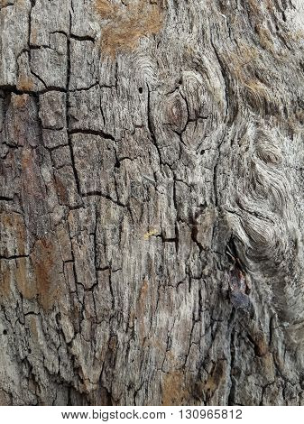 dry old bark tree texture for background