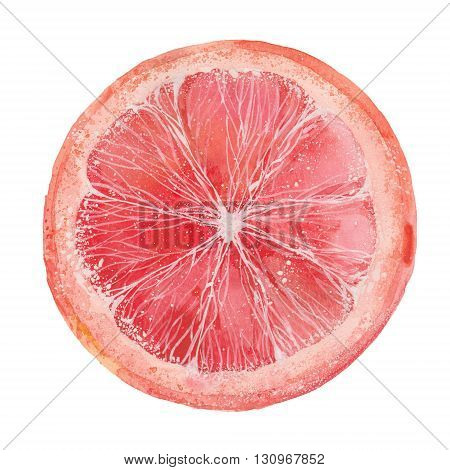 slice of grapefruit watercolor illustration on a white background