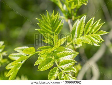 sunny illuminated fresh green tree sprouts at springtime