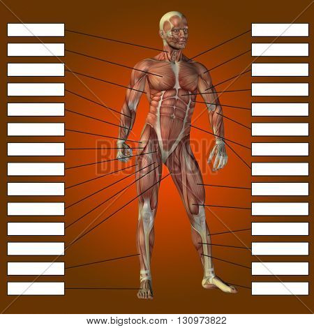3D illustrattion of a concept or conceptual male or human anatomy, a man with muscles and textbox on red gradient background