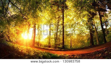 Fisheye landscape shot of a footpath in the forest at sunset with the foliage shining gold in the warm sunlight