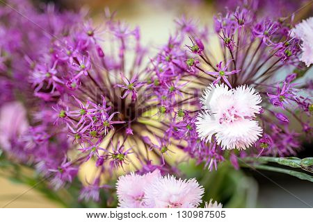 Macro image of spring violet flowers, abstract soft floral background