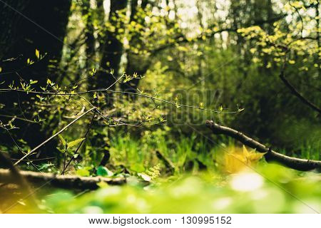 Forest tree branches. Nature green sunlight backgrounds.