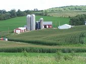 stock photo of farm landscape  - a group of farm buildings surrounded by a corn field in wisconsin - JPG