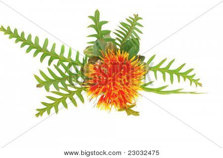 image of gold flower on white background