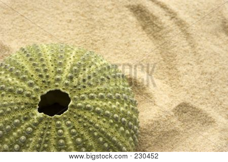 Sea Urchin On Sand