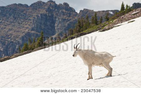 Happy Mountain Goat