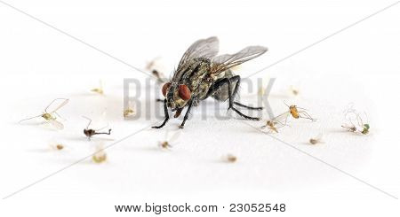 terror big flesh-fly