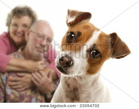 Adorable Jack Russell Terrier and Adoring Senior Couple Behind Isolated on a White Background.