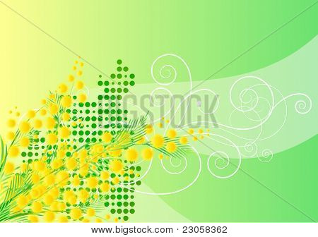 Vector spring mimosa background  with free space for your text