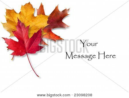 Three Fall Leaves Card