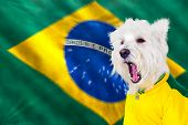 Brazilian west highland white terrier screaming with blurred zoom movement flag poster