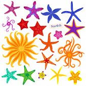Sea Stars Set. Multicolored Starfish On A White Background. Starfishes Underwater Invertebrate Anima poster