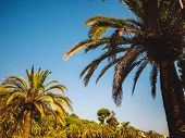 Amazing Sunset On Palm Coast In The Subtropics. Beautiful Date Palms Trees In Barcelona. Awesome Sky poster