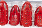 Red Sledges Ready To Rent. Winter Sports. Recreation. Horizontal poster