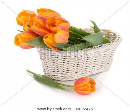 Flores de tulipas laranja. Isolado no fundo branco